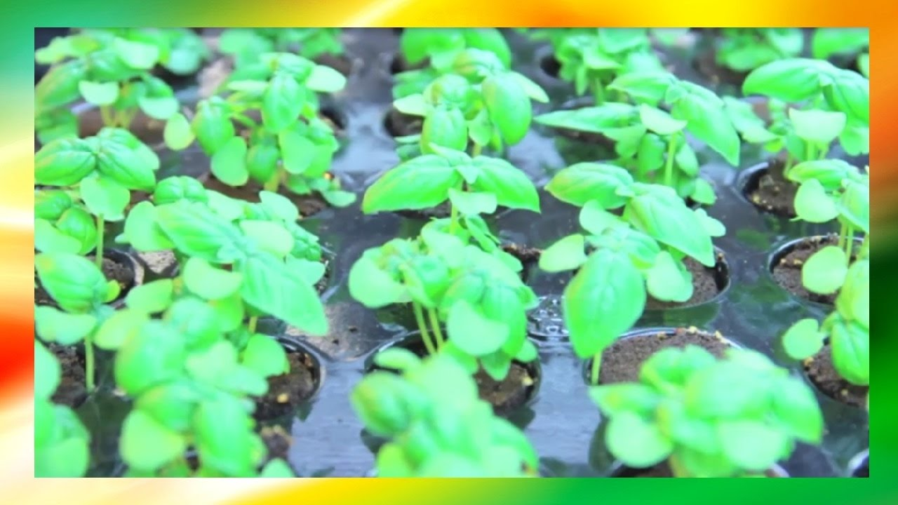 Basic Hydroponics Theory and Practical Uses (Vertical Farming)