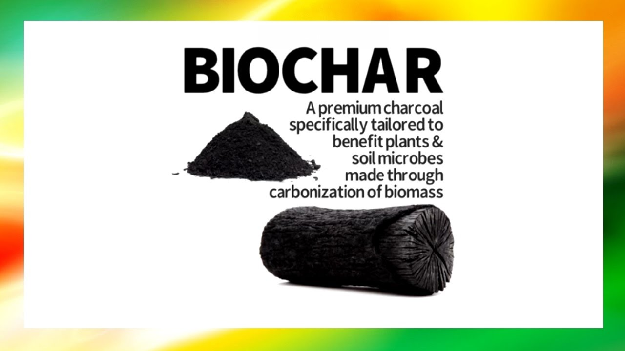 What is Biochar and How It Benefits Plant Growth